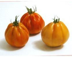 Pianta di Pomodoro Cuor di Bue F1 Levante (vaso 10 cm)