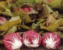 Pianta di Cicoria di Chioggia Leonardo (Vaschetta da 9 piante)