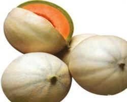 Pianta di Melone Liscio F1 Bacir