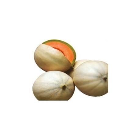 Pianta di melone liscio f1 bacir societ agricola il for Pianta di melone