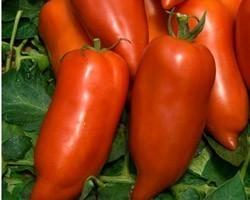 Pianta di Pomodoro a Corno F1 Cornabel (Vaschetta da 4 piante)