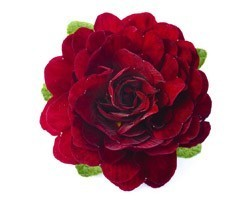 Pianta di Primula Belarina Valentine(Vaso 12 cm)