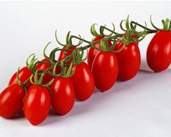 Pianta di Pomodoro Datterino F1 Ornela (vaschetta da 4 piante)
